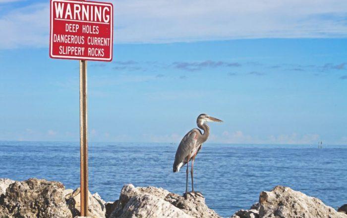 Bird and warning deep holes signboard